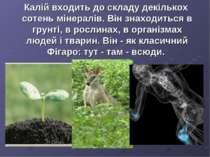 Калій входить до складу декількох сотень мінералів. Він знаходиться в грунті,...
