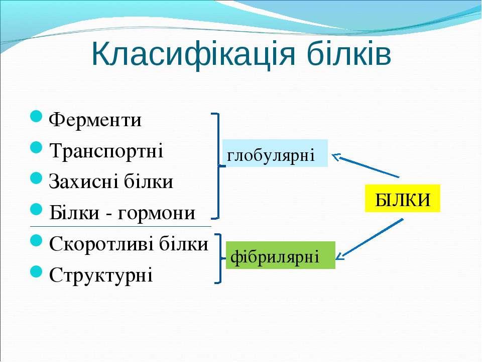 Класифікація білків Ферменти Транспортні Захисні білки Білки - гормони Скорот...