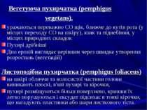 Вегетуюча пухирчатка (pemphigus vegetans). уражаються переважно CO щік, ближч...
