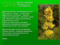 КОРЕНІ ТИРЛИЧУ - RADICES GENTIANAE ТИРЛИЧ ЖОВТИЙ - GENTIANA LUTEA РОДИНА ТИРЛ...