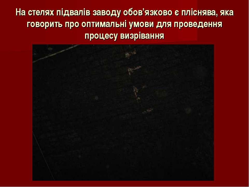 На стелях підвалів заводу обов'язково є пліснява, яка говорить про оптимальні...