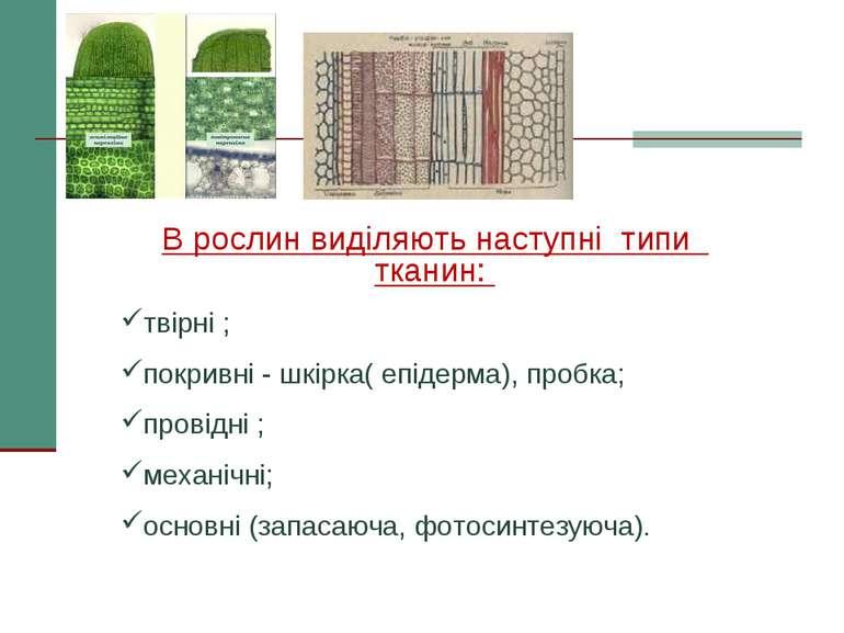 В рослин виділяють наступні типи тканин: твірні ; покривні - шкірка( епідерма...