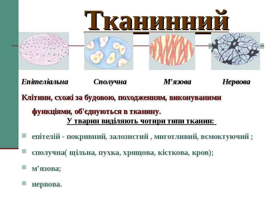 Тканинний Епітеліальна Сполучна М'язова Нервова Клітини, схожі за будовою, по...