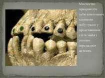 Мистецтво прикрашати зуби коштовним камінням побутувало у представників еліти...