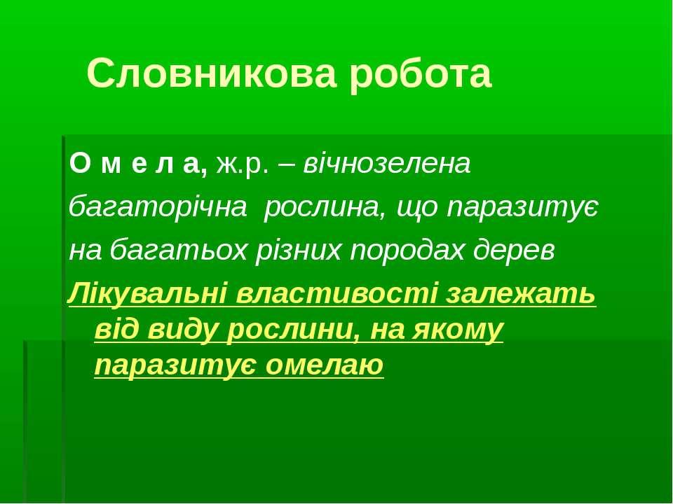 Словникова робота О м е л а, ж.р. – вічнозелена багаторічна рослина, що параз...