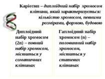 Каріотип – диплоїдний набір хромосом клітини, який характеризується: кількіст...
