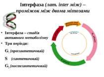 Інтерфаза (лат. іnter між) – проміжок між двома мітозами Інтерфаза – стадія а...