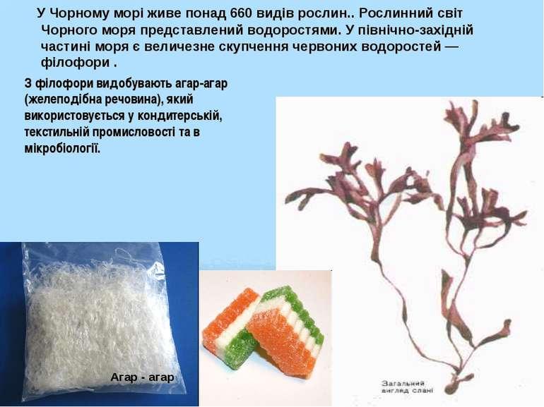 У Чорному морі живе понад 660 видів рослин.. Рослинний світ Чорного моря пред...
