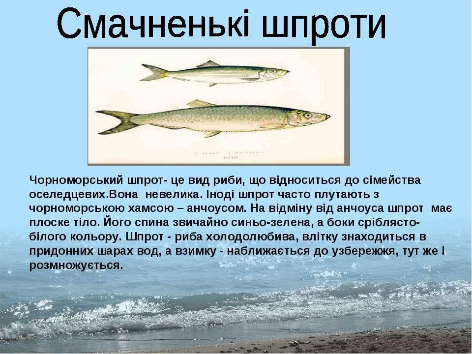 Чорноморський шпрот- це вид риби, що відноситься до сімейства оселедцевих.Вон...