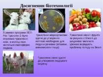 Досягнення біотехнології В рамках програми БЕЛ-Рос Трансген-2 було отримано т...
