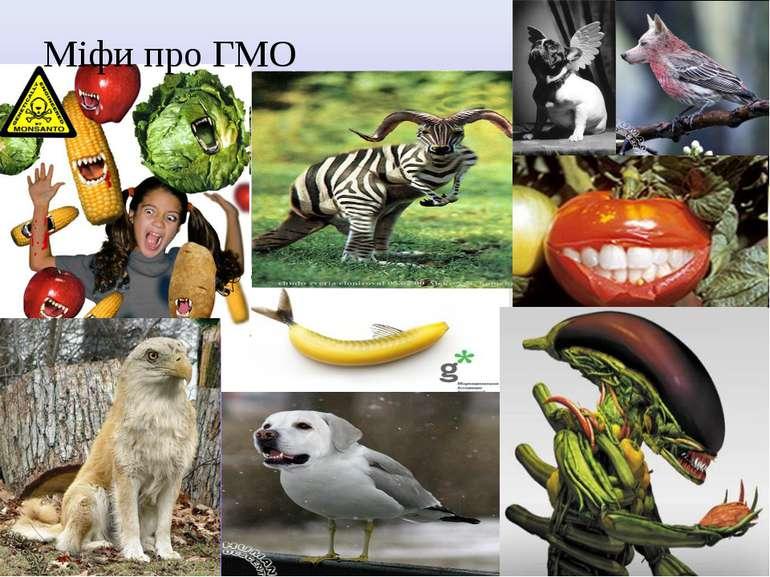 Міфи про ГМО