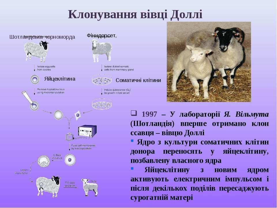 1997 – У лабораторії Я. Вільмута (Шотландія) вперше отримано клон ссавця – ві...