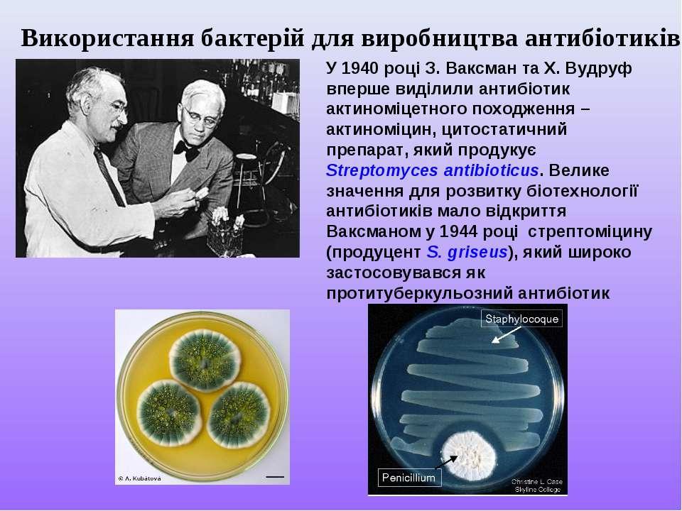 Використання бактерій для виробництва антибіотиків У 1940 році З. Ваксман та ...