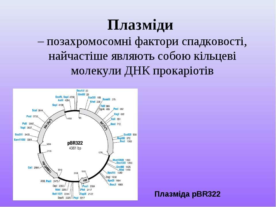 Плазміди – позахромосомні фактори спадковості, найчастіше являють собою кільц...