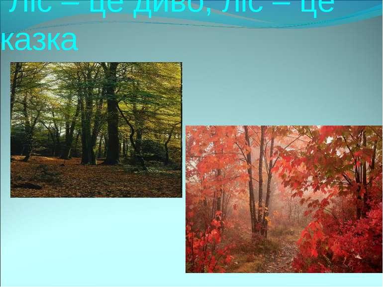 Ліс – це диво, ліс – це казка