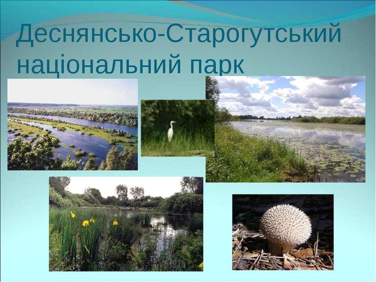 Деснянсько-Старогутський національний парк
