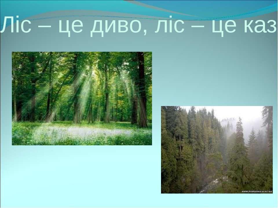 Ліс – це диво, ліс – це казка.