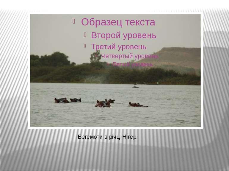 Бегемоти в річці Нігер