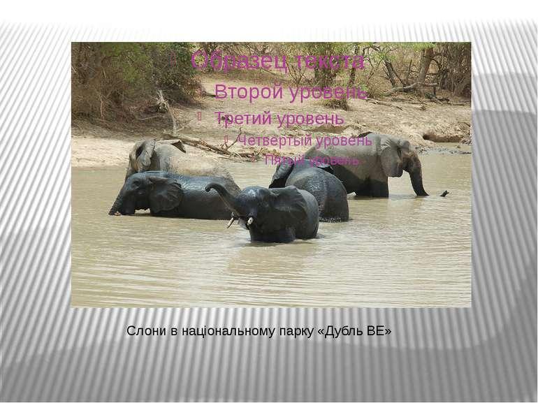 Слони в національному парку «Дубль ВЕ»