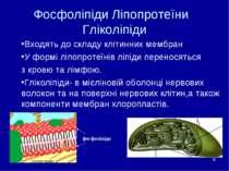 * Фосфоліпіди Ліпопротеїни Гліколіпіди Входять до складу клітинних мембран У ...