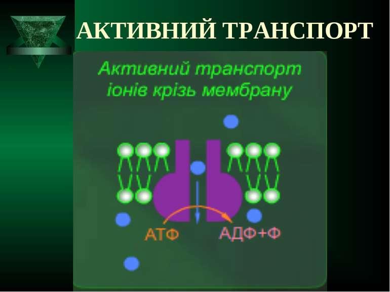 АКТИВНИЙ ТРАНСПОРТ