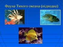 Фауна Тихого океана (підводна)