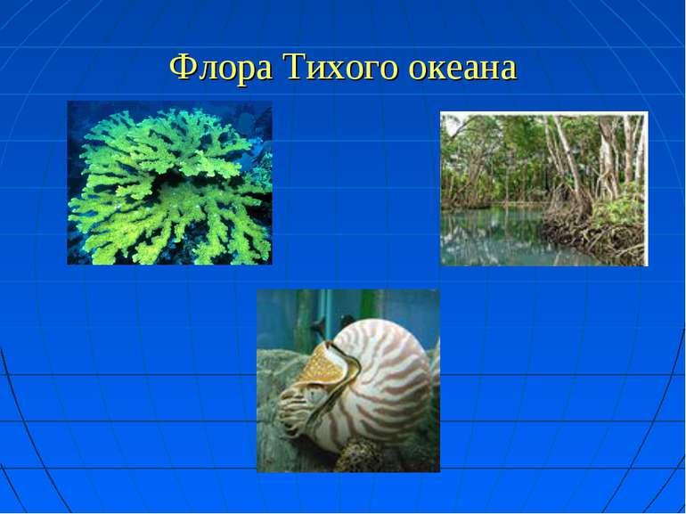 Флора Тихого океана
