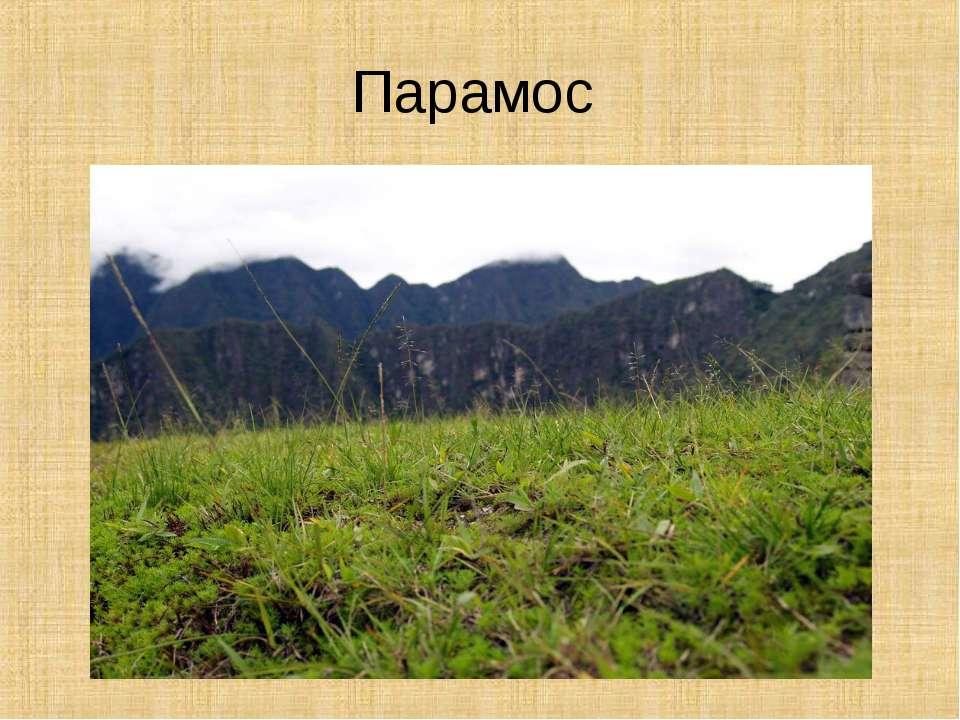 Парамос