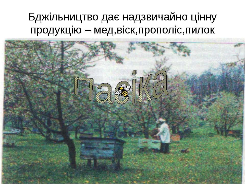 Бджільництво дає надзвичайно цінну продукцію – мед,віск,прополіс,пилок