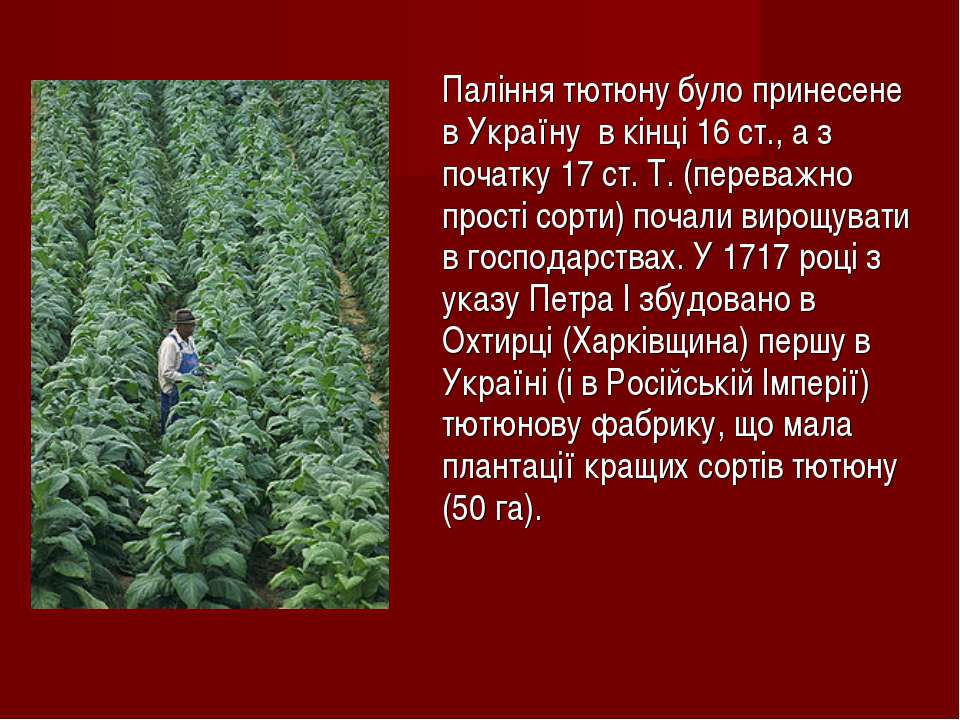 Паління тютюну було принесене в Україну в кінці 16 ст., а з початку 17 ст. Т....