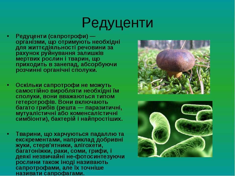 Редуценти Редуценти (сапротрофи) — організми, що отримують необхідні для житт...