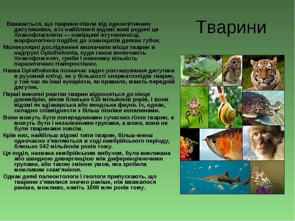 Тварини Вважається, що тварини пішли від одноклітинних джгутикових, а їх найб...