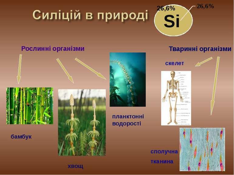 Si Рослинні організми бамбук хвощ Тваринні організми планктонні водорості ске...