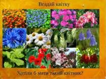 Вгадай квітку Хотіли б мати такий квітник?