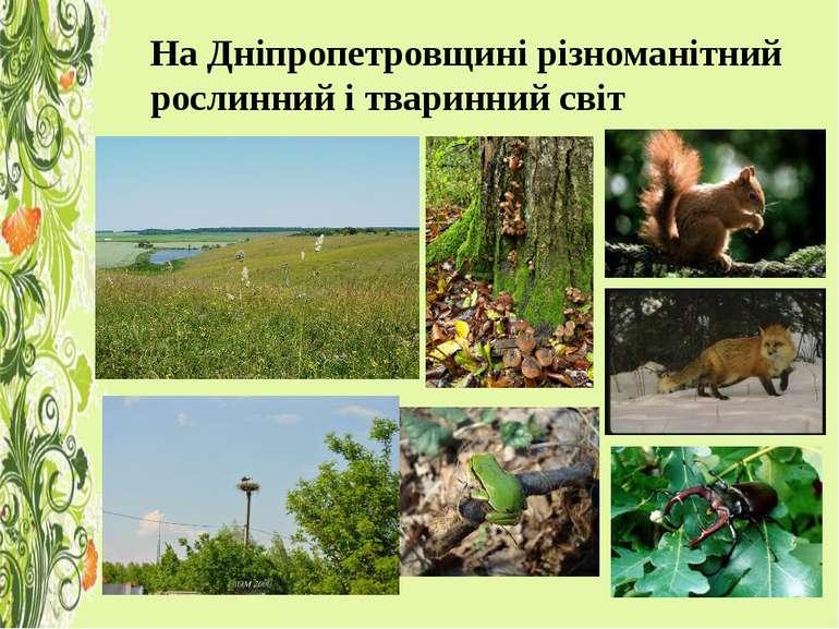 На Дніпропетровщині різноманітний рослинний і тваринний світ