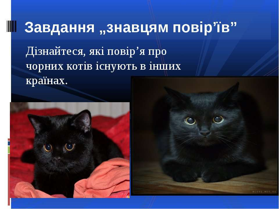 """Завдання """"знавцям повір'їв""""Дізнайтеся, які повір'я про чорних котів існують в..."""