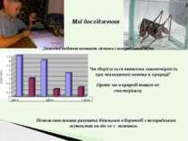 Мої дослідження Динаміка поїдання кониками личинок і колорадського жука Чи зб...