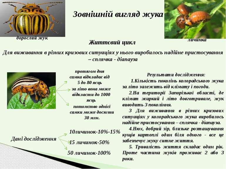 Зовнішній вигляд жука дорослий жук личинка Життєвий цикл Для виживання в різн...