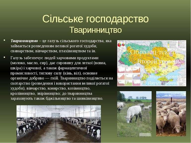 Сільське господарство Тваринництво Тваринництво – це галузь сільського господ...