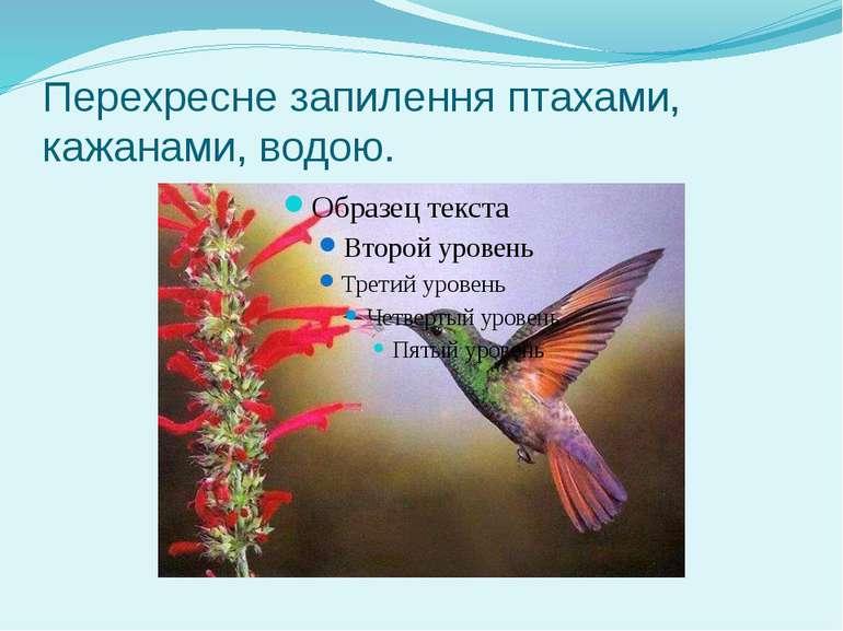 Перехресне запилення птахами, кажанами, водою.