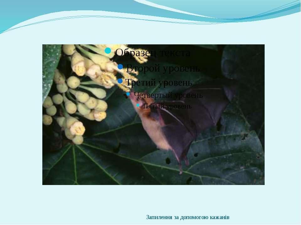 Запилення за допомогою кажанів