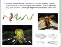 Кінцівки членистоногих складаються з кількох члеників і рухомо з'єднані з тіл...