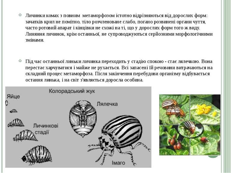 Личинки комах з повним метаморфозом істотно відрізняються від дорослих форм: ...