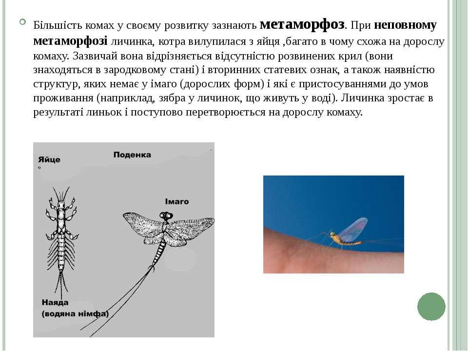 Більшість комах у своєму розвитку зазнають метаморфоз. При неповному метаморф...