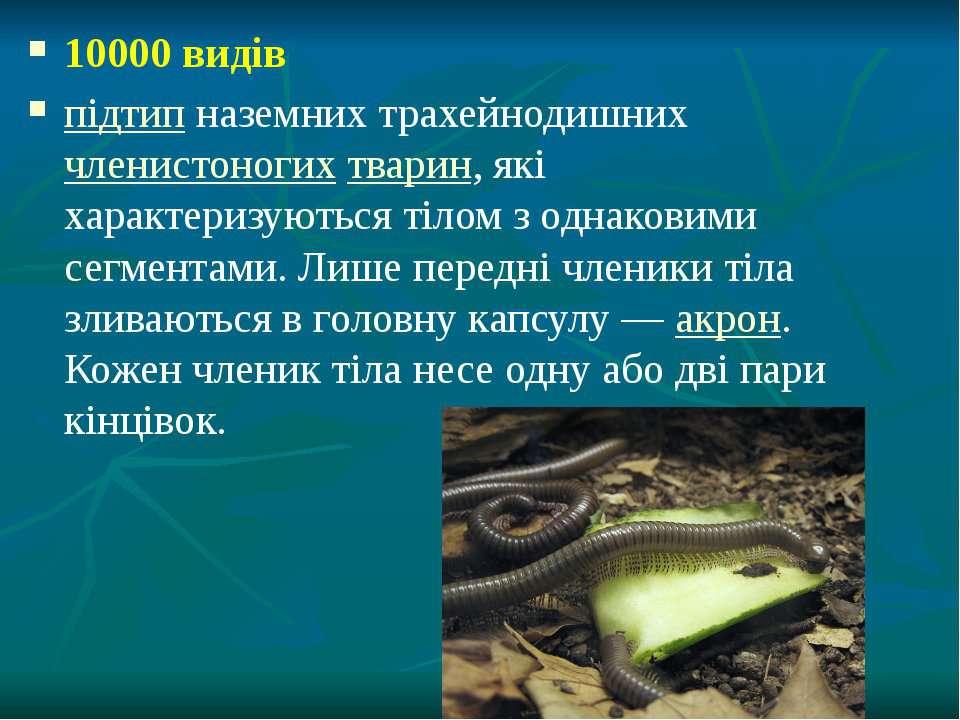 10000 видів підтип наземних трахейнодишних членистоногих тварин, які характер...