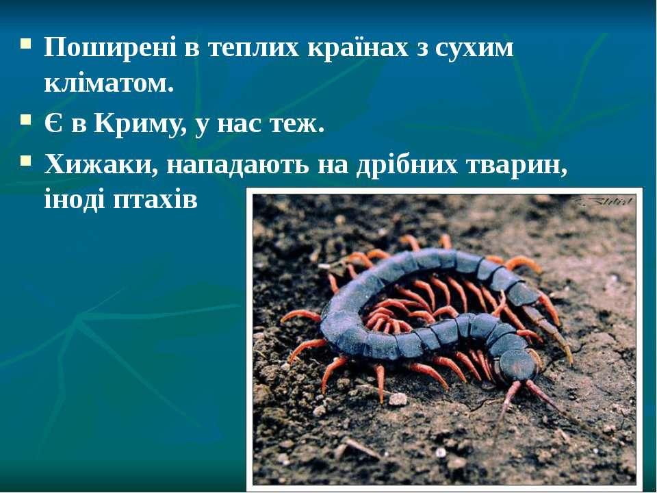Поширені в теплих країнах з сухим кліматом. Є в Криму, у нас теж. Хижаки, нап...