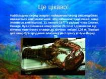 Найбільшим серед омарів і найважчим серед ракоподібних вважається американськ...