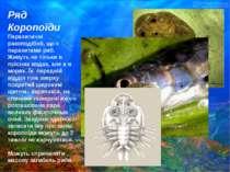 Ряд Короnоїди Паразитичні ракоподібніі, що є паразитами риб. Живуть не тільки...
