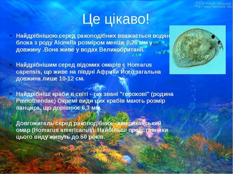 Це цікаво! Найдрібнішою серед ракоподібних вважається водяна блоха з роду Alo...