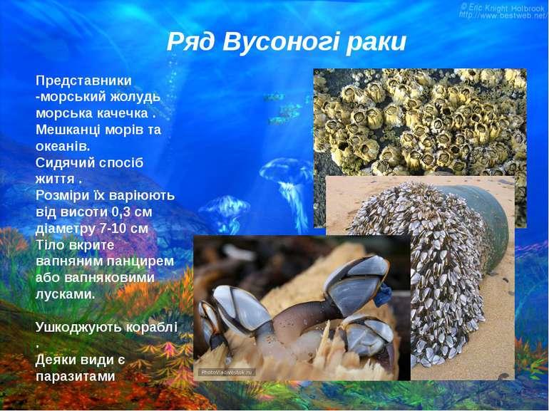 Представники -морський жолудь морська качечка . Мешканці морів та океанів. Си...